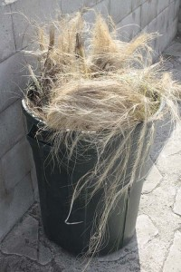 Feathergrass in the trash