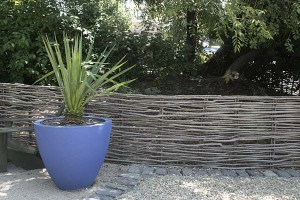 Potted plant in Healdsburg