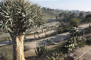 balboa-park-succulent-looking-towards-florida-canyon