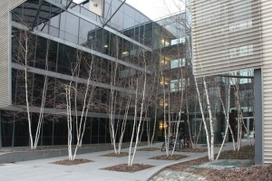 chicago-iit-birches-2
