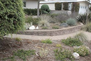 dry-yard-with-mixed-planting