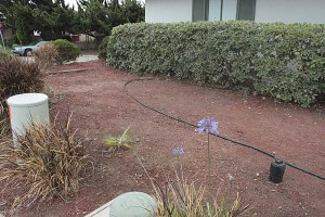 dry-yard-with-red-mulch