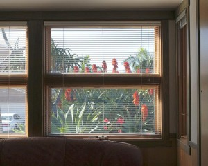 front-window-aloe-view