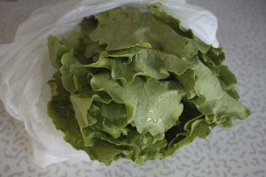 head-of-lettuce
