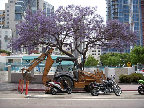jacaranda in bloom over backhoe