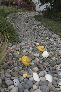 stream-with-duckies