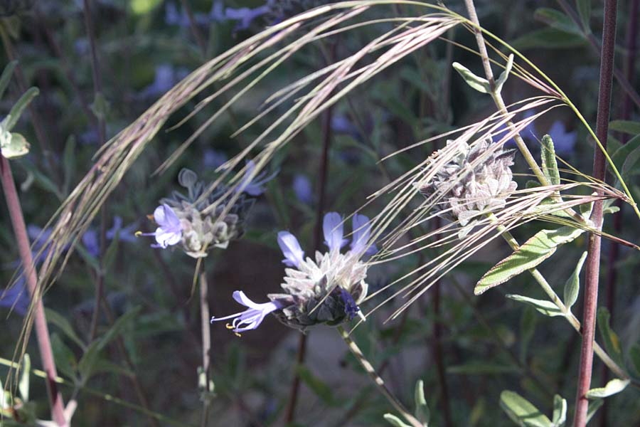 bloom day: natives at home and in the wild | [ Lost in the ...