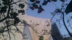 Disney Hall Garden coral tree and building