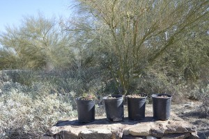 New plants at ABDSP visitor center