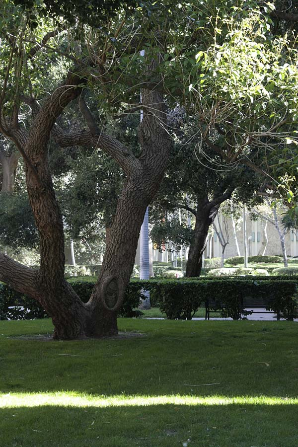 University Of Southern California Lost In The Landscape